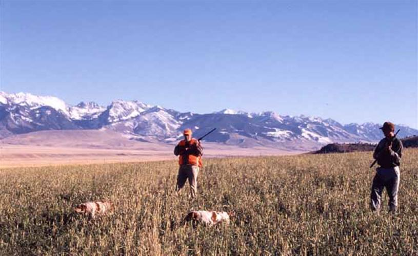 mountain view with hunting dogs