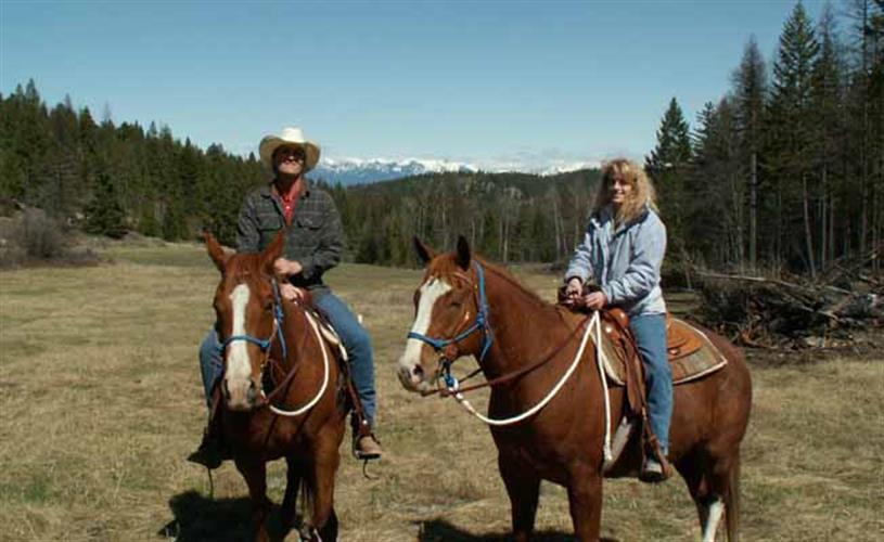 horse ride in meadow