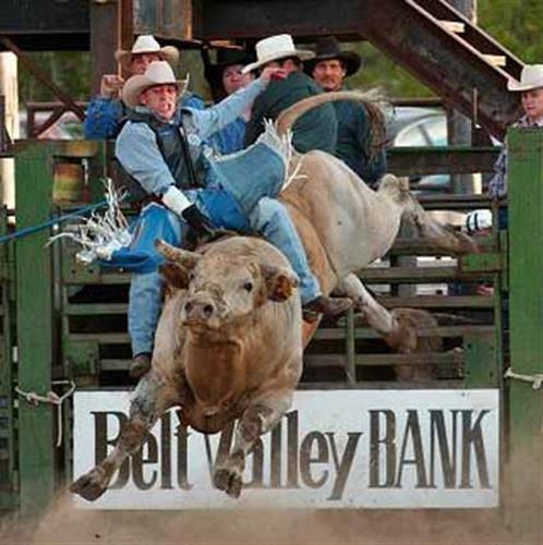 bull riding