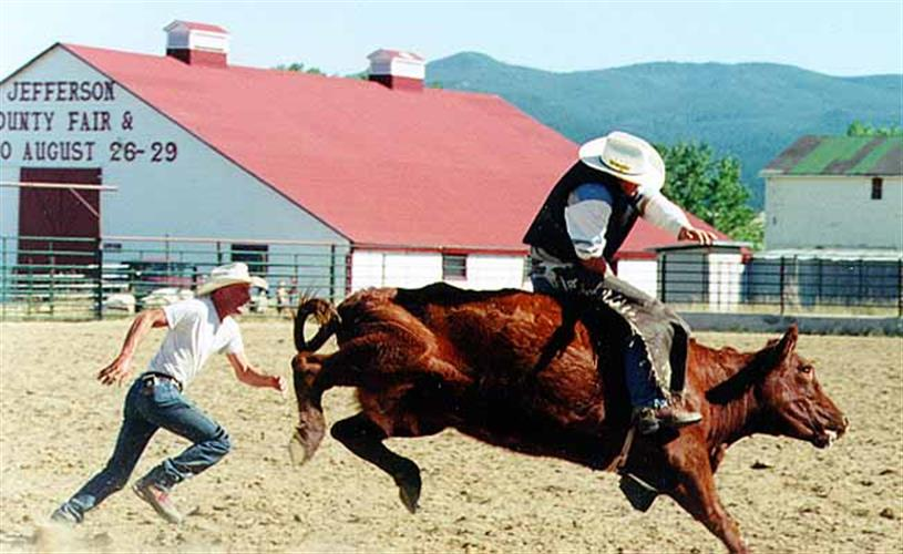 cow rider