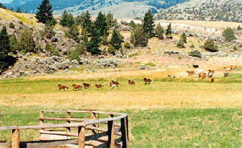 horses running across pasture