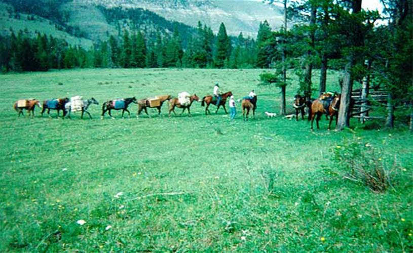 string of pack horses