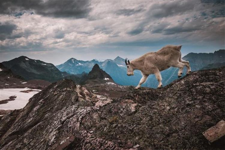 """Crown of the Continent: The Wildest Rockies"""