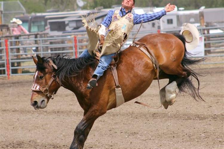 The action of rodeo doesn't get any more real than this!