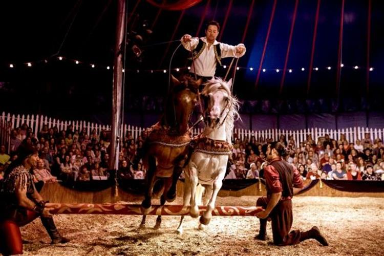 Montana Festival of the Horse