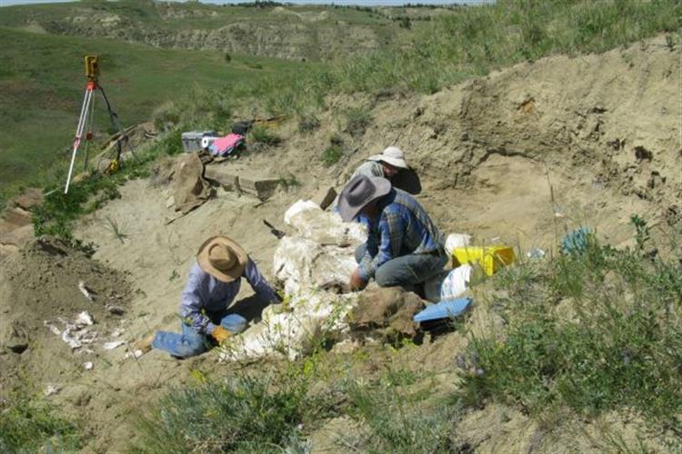 Montana Dino Dig - Adult Field Program with the Great Plains Dinosaur Museum of Malta, Montana
