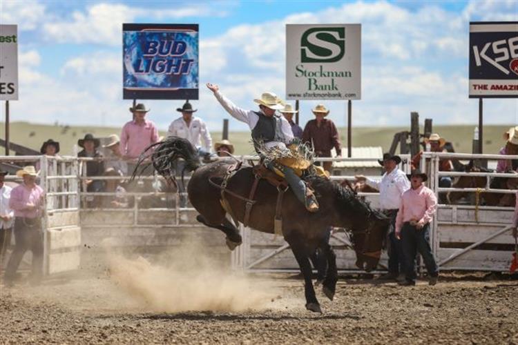 Saddle Bronc rider in action